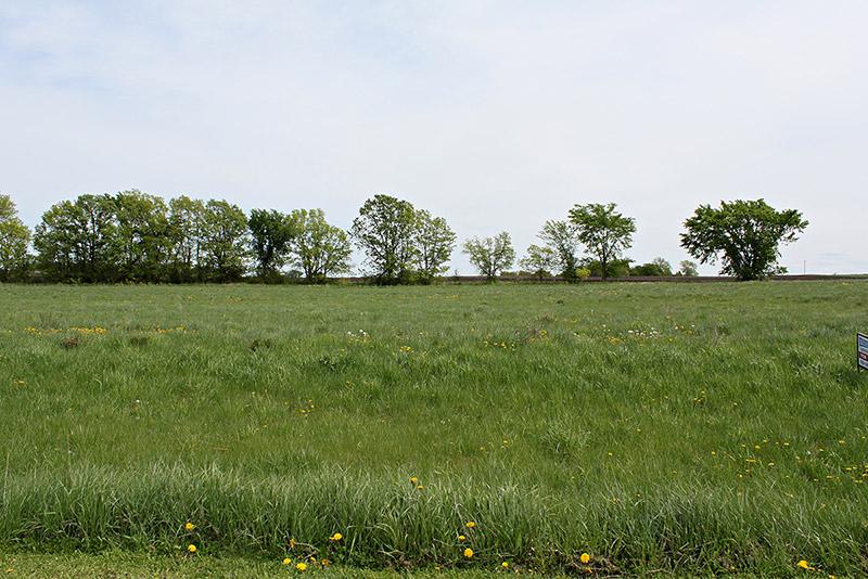 greenleaf (4)