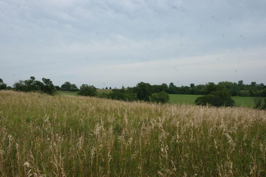 maidenrock (3)